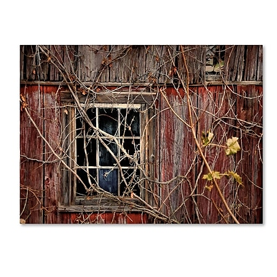 Trademark Fine Art 'Old Barn Window' 14