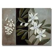 Trademark Fine Art 'White Fresh'