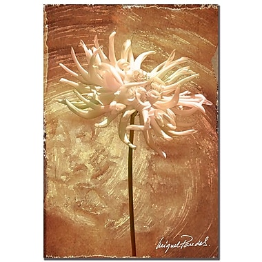 Trademark Fine Art 'Wax Flower III' 22