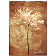 "Trademark Fine Art 'Wax Flower III' 22"" x 32"" Canvas Art"