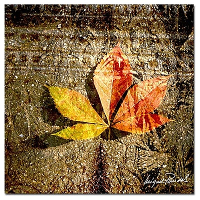 Trademark Fine Art ' Red Leaves II' 18