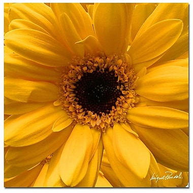 Trademark Fine Art 'Yellow Field' 24