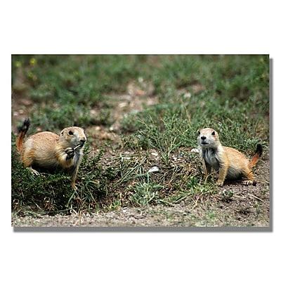 Trademark Fine Art 'Dakota Prairie Dog' 22
