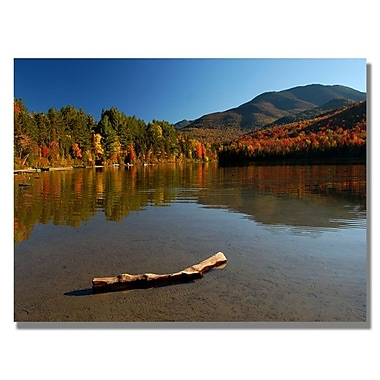 Trademark Fine Art 'The Adirondack Driftwood'