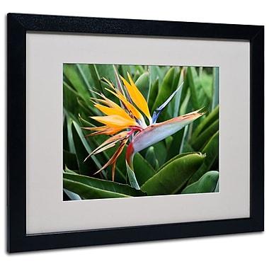 Trademark Fine Art 'Bird of Paradise' 16