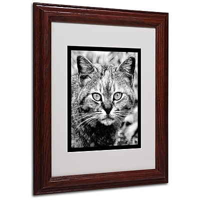 Trademark Fine Art 'Black & White Pretty Kitty' 11