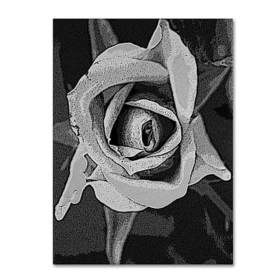 Trademark Fine Art 'Black & White Rose' 35