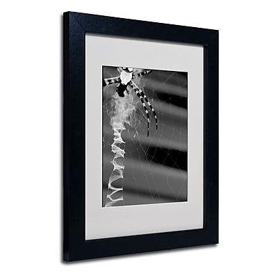 Trademark Fine Art 'Black & White Spider & Web' 11
