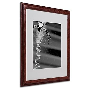 Trademark Fine Art 'Black & White Spider & Web' 16