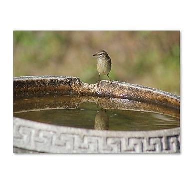 Trademark Fine Art 'Little Bird' 16