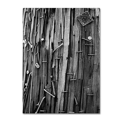 Trademark Fine Art 'Nails & Staples' 30