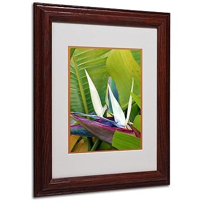 Trademark Fine Art 'Paradise Color' 11