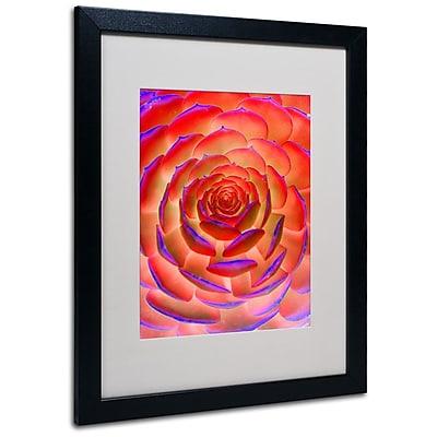 Trademark Fine Art 'Plant Art' 16