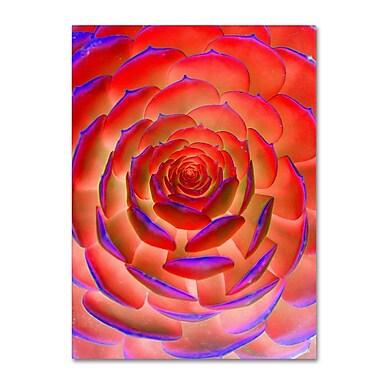 Trademark Fine Art 'Plant Art' 14