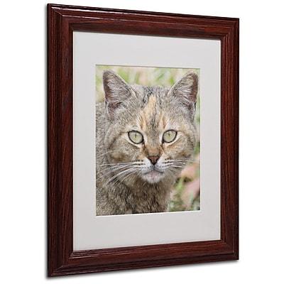 Trademark Fine Art 'Pretty Kitty' 11
