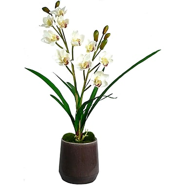 Laura Ashley® White Orchid in Ceramic Container