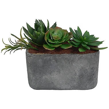 Laura Ashley® Succulents in a Clay Container