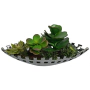 Laura Ashley Succulents in a Silver Ceramic Container