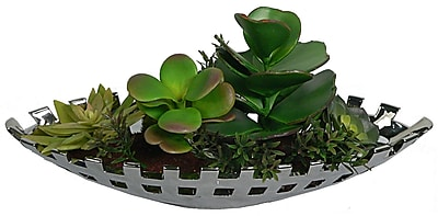 Laura Ashley® Succulents in a Silver Ceramic Container