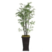 "Laura Ashley 91"" Bamboo Trees in 16"" Fiberstone Planter"