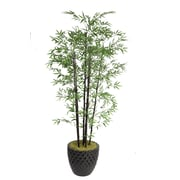 "Laura Ashley 78"" Bamboo Trees in 16"" Fiberstone Planter"