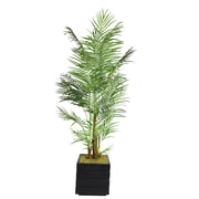 "Laura Ashley 82"" Areca Palm Trees in 14"" Fiberstone Planter"