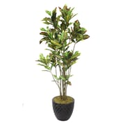 "Laura Ashley 78"" Croton Trees With Multiple Trunks in 16"" Fiberstone Planter"