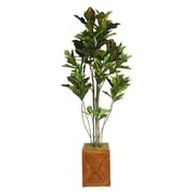 "Laura Ashley 81"" Croton Tree With Multiple Trunks in 13"" Fiberstone Planter"