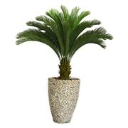 "Laura Ashley 62"" Cycas Palm Tree in 16"" Fiberstone Planter"