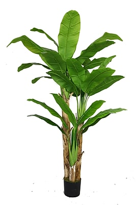 """Laura Ashley 72"""" Banana Tree With Real Touch Leaves"""