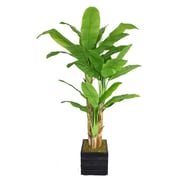 "Laura Ashley 78"" Banana Trees With Real Touch Leaves in 14"" Fiberstone Planter"