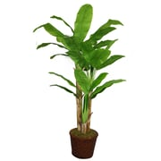 """Laura Ashley 77"""" Banana Tree With Real Touch Leaves in 17"""" Fiberstone Planter"""