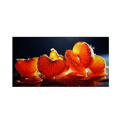 Trademark Fine Art 'Mandarin Orange' 24