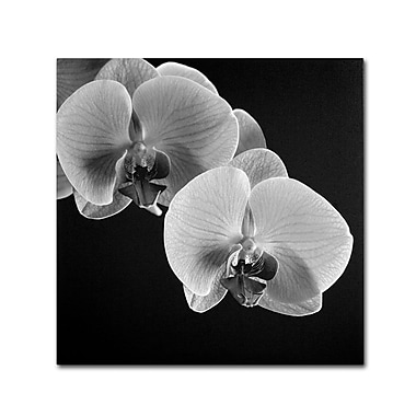 Trademark Fine Art 'Orchids' 24