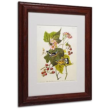 Trademark Fine Art 'Black and Yellow Warbler' 11