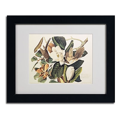 Trademark Fine Art 'Black-Billed Cuckoo' 11