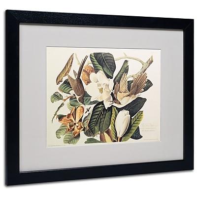 Trademark Fine Art 'Black-Billed Cuckoo' 16