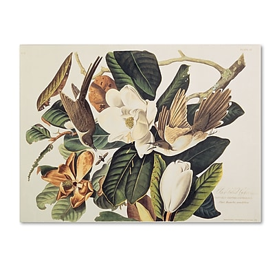Trademark Fine Art 'Black-Billed Cuckoo' 35