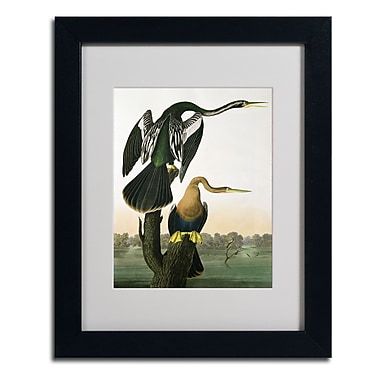 Trademark Fine Art 'Black-Billed Darter' 11