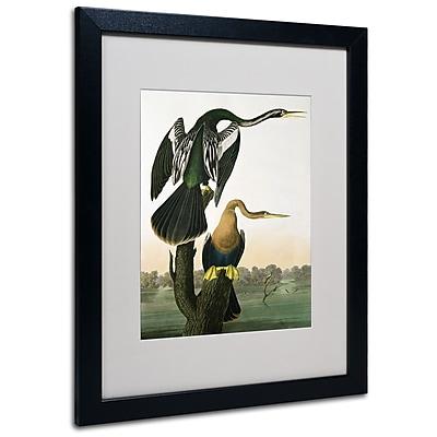 Trademark Fine Art 'Black-Billed Darter' 16