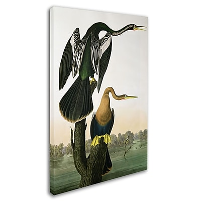 Trademark Fine Art 'Black-Billed Darter' 30