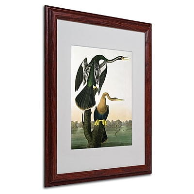 Trademark Fine Art 'Black-Billed Darter' 16