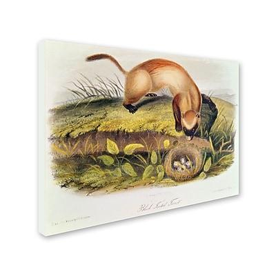 Trademark Fine Art 'Black-Footed Ferret' 35