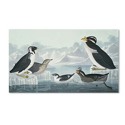 Trademark Fine Art 'Black-Throated Guillemot' 10