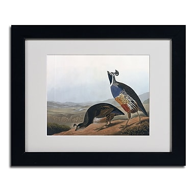 Trademark Fine Art 'Californian Partridge'