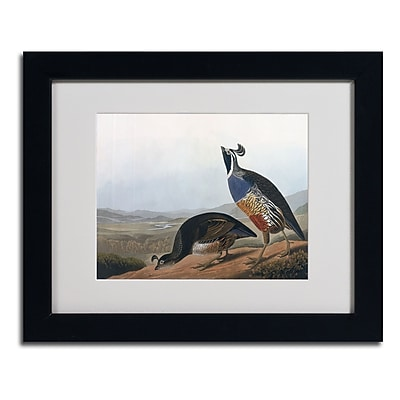 Trademark Fine Art 'Californian Partridge' 11