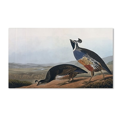 Trademark Fine Art 'Californian Partridge' 10