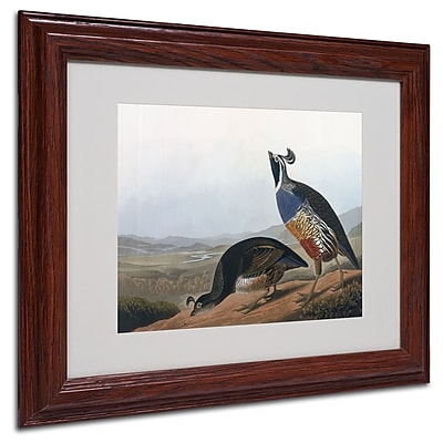 Trademark Fine Art 'Californian Partridge' 11