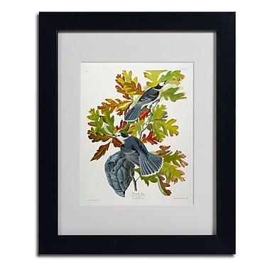 Trademark Fine Art 'Canada Jay'