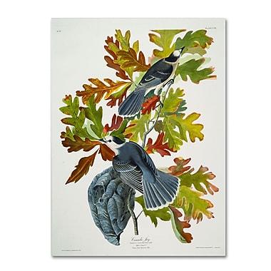 Trademark Fine Art 'Canada Jay' 18
